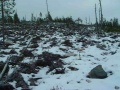 Ranua-Camp Clearcut.jpg